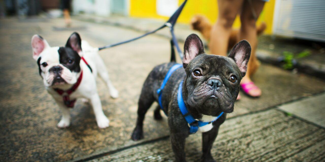 Frem din hunds velvære med det rette udstyr