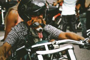 hundeudstyr