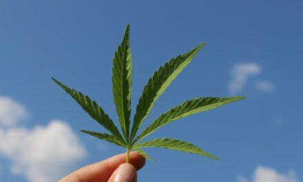 Få den nyeste viden omkring vidundermidlet Cannabisolie